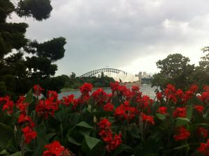 Sydney Harbour from Botanic Gardens